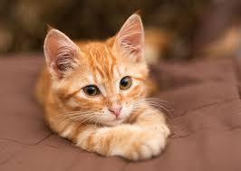 orange cat names the most trendy cat names of 2015