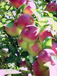 Pumpkin Picking Nj by Apple Picking In New Jersey Jersey Kids