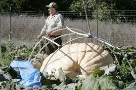 Napa Pumpkin Patch Hours by Napa Man Sets New Pumpkin Standard Local News