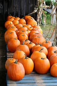 The Colony Tx Pumpkin Patch by 2524 Best Pumpkin Images On Pinterest Book Ideas And Life