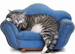 cat sofa 132 best furniture for cats images on cat furniture