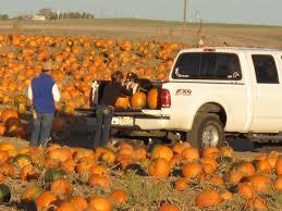Denver Area Pumpkin Patches best 25 pumpkin patch denver ideas on pinterest local pumpkin