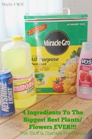 Homemade Fertilizer For Pumpkins by 4 Bizarre Ingredient Plant Food Big Plants Plants And Gardens