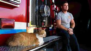 Flame, The Belmont Fire Department Cat, Received Award From ASPCA 10 Awesome Places To Adopt A Dog Or Cat In Nyc Adopt Pet Hells Kitsch New York Today The Lunar Year Laundromat News Aspca Car Seat Cover For Dogs Walmartcom Home Aspcapro Worlds Most Recently Posted Photos Of Aspca And Nyc Flickr Spca Wchester County Mobile Animal Clinic Brooklyn City Bring Cat Free From The Aspcas Friday Adoption 25 Best Memes About Narcotics