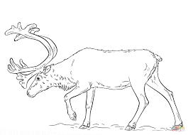Click The Swedish Reindeer Coloring Pages