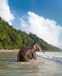 100 Taj Exotica Resort And Spa Havelock Island Amans India