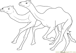 Camel Coloring Pages Racing Page Free