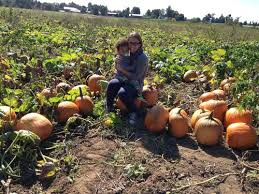 Pumpkin Picking Richmond by 7 Farms To Go Pumpkin Picking Near Nyc Beyond Mom