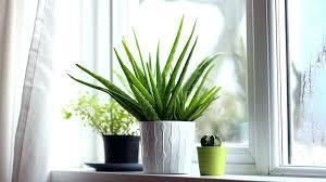plante verte dans une chambre à coucher plantes pour chambre chambre plantes plante pour chambre feng shui