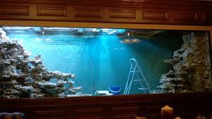 aquarium dans le mur quel décor pour mon aquarium aquaroche