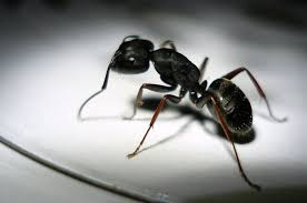 How to keep ants out of your house naturally TreeHugger