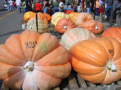 Pumpkin Festival Circleville Ohio 2 by Barnesville Pumpkin Festival Wikipedia