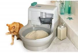 best cat litter boxes the best litterbox be positive in and writing