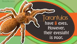 Do Tarantulas Shed Their Legs by Terribly Interesting Facts About Tarantulas For Kids