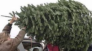 Curbside Pickup Recycling For Christmas Trees CBS Miami