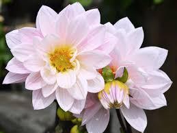 summer blooming bulbs dennis 7 dees