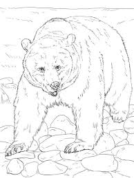 Realistic Grizzly Bear Coloring Page From Bears Category Select 25266 Printable Crafts Of Cartoons Nature Animals Bible And Many More