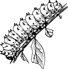 Free Clipart A Caterpillar Bug