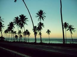 Cali California Beach Ocean Palm Trees Sunset Tree The 500x375