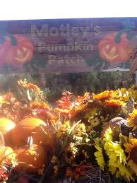 Motley Pumpkin Patch by 28 Motley Pumpkin Patch Local Runner Interview With Tia