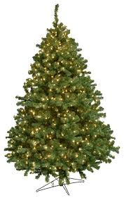 Alaskan Fir Tree Traditional Christmas Trees by Barcana
