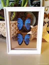 2 DIY Butterfly Frame Double Framed Butterflies Home Made Top View