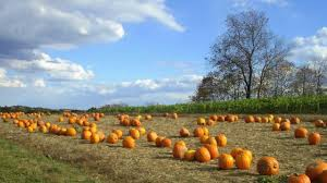 Pumpkin Patch Rides by Pick The Perfect Pumpkin At Pittsburgh U0027s Best Pumpkin Patches Axs
