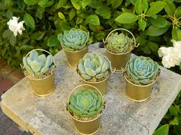 Succulent Plants Wedding Favor