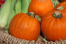 Largest Pumpkin Ever Grown 2015 by Pumpkin Nutrition Information Healthy Recipes And Fun Facts