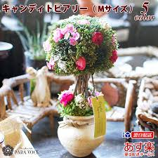 It Is A Gift Interior Artificial Flower Gift On A Celebration Of  Resignation Flower Gift Fashion Message Birthday On A Birthday Present  Flower Present ... La Times Coupon Code Carnival Money Aprons Coupon Codes For Overstock Fniture Yelp How To Get Every Possible Discount At The 2018 State Fair Of Texas Bjs Whosale Club Coupon Candytopia La Sneak Peek Dos And Donts Mplsstpaul Magazine Lion King New York Promo Dicks Sporting Good Shipping Spend An Hour Immersed In A Candy Land Amy Ever After 8 Things Know Before You Visit Atlanta