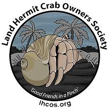 Do Hermit Crabs Shed Their Body by Is My Hermit Crab Dead Or Molting