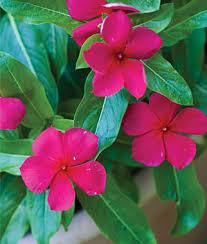 new interior best annual flower seeds plants buy grow flowers