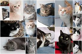 cats for safe cat shelter clinic for cats for