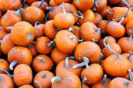Varieties Of Pumpkins by 9 Best Pumpkins For Cooking