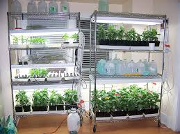 Can Plants Grow With Light Bulbs Grow Lamp In Hydroponics