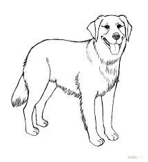 Realistic Golden Retriever Coloring Pages How To Draw A 7 Steps With Pictures WikiHow