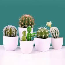 simulation kaktus sukkulente blühenden kaktus blumentopf gefälschte fleisch blume büro dekorationen wohnzimmer dekoration
