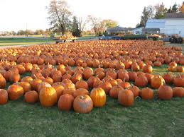 Columbus Indiana Pumpkin Patch by Johnson U0027s Giant Pumpkin Farm Saginaw Mi Kid Activities Mi