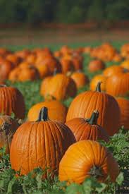 Pumpkin Patch Near Caledonia Mi by 722 Best Michigan Memories Images On Pinterest Mittens Michigan