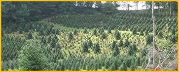 Fraser Christmas Tree Care by Nc Christmas Tree Farm Nc Fraser Fir Safety