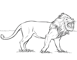 Exciting Coloring Pictures Of A Lion Best Pages For Kids Wild Animals
