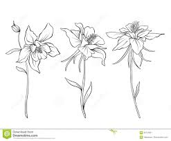 Royalty Free Vector Download Columbine Flowers