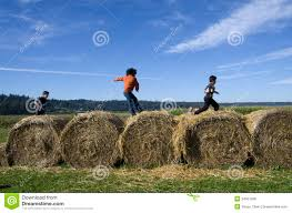 Seattle Pumpkin Patch by Kids Playing At Hay Bales At Pumpkin Farm Editorial Stock Photo