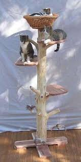 best 25 cat tree house ideas on pinterest cat towers diy cat