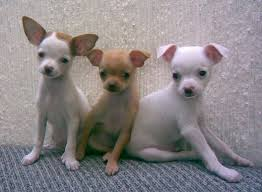 Small Non Shedding Dogs For Adoption by The Seven Best Dog Breeds For Someone Who Works All Day Pethelpful