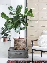 kaktus pflanzenfreude
