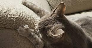 comment eviter les griffes de sur canape mon fait ses griffes sur mes meubles que faire eduquer