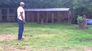 Back Yard Breeder Kennel Dogs - YouTube Whosale Custom Logo Large Outdoor Durable Dog Run Kennel Backyard Kennels Suppliers Homestead Supplier Sheds Of Daytona Greenhouses Runs Youtube Amazoncom Lucky Uptown Welded Wire 6hwx4l How High Should My Chicken Run Fence Be Backyard Chickens Ancient Pathways Survival School Llc Diy House Plans Deck Options Refuge Forums Animal Shelters The Barn Raiser In Residential Industrial Fencing Company