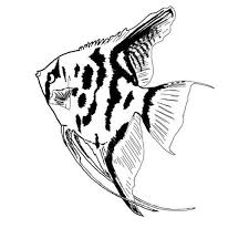 Long Flipper Angel Fish Colouring Page