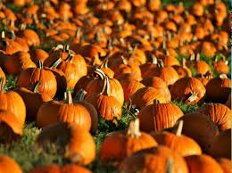Roca Pumpkin Patch Lincoln by Don U0027t Miss These 19 Great Pumpkin Patches In Nebraska This Fall